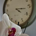 即日配達で胡蝶蘭を届けたい時の注意ポイント5選
