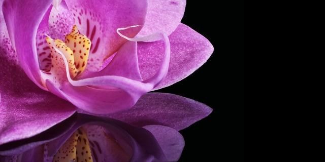 胡蝶蘭の花びらに出る病気