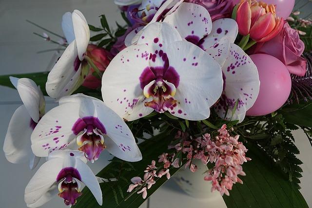 キャバ嬢やホステスに喜ばれる胡蝶蘭のお贈り方とは