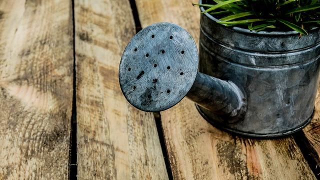 胡蝶蘭に大切な水やりの仕方