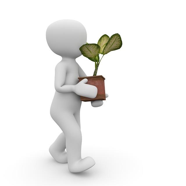 胡蝶蘭をバークで植え替えるときと後に注意することとは