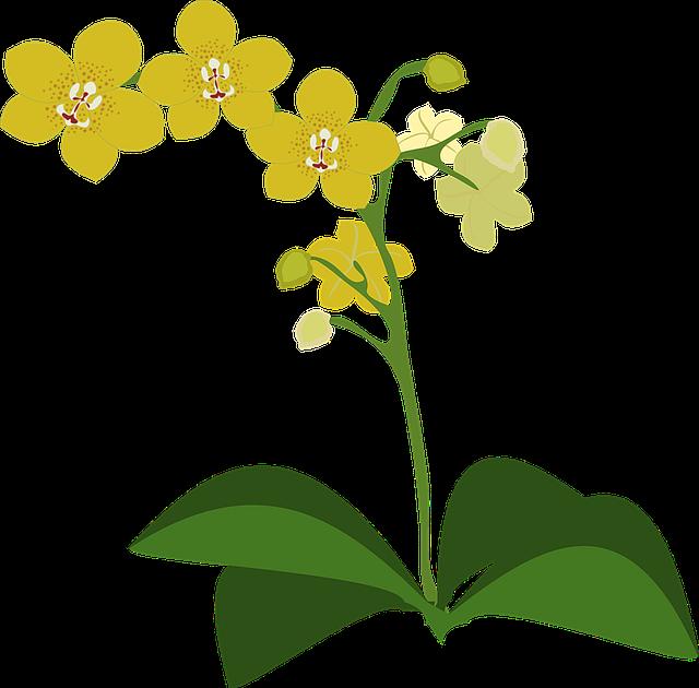 胡蝶蘭は葉でサインを出す!見逃さないで早めの対処をしよう!