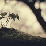 胡蝶蘭のつぼみが、枯れて、しおれた!落ちる前の対策法