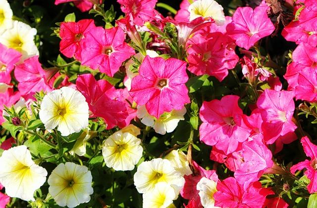 長く持つ花は胡蝶蘭?もらった花を長く咲かせる簡単な方法