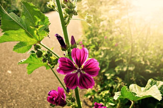 長く持つ花