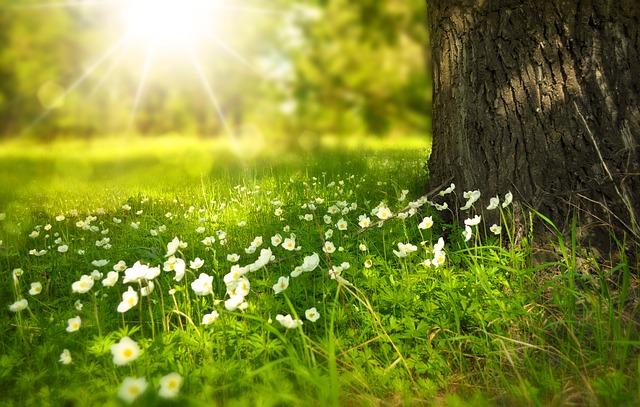 胡蝶蘭は春に咲く花?胡蝶蘭を咲かせるコツ