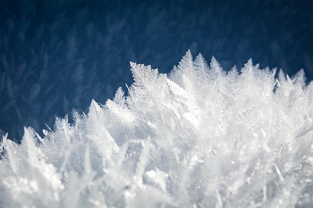 冬場は気を付けて!胡蝶蘭が凍傷になる理由と対処方法