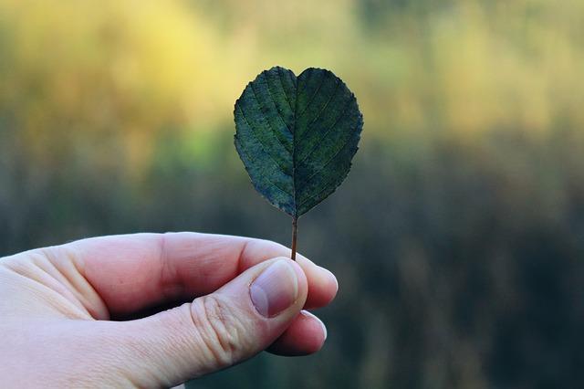 胡蝶蘭をもう一度咲かせる方法ってあるの?