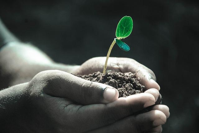 胡蝶蘭に土は必要ないって本当?鉢がない新しい胡蝶蘭の育て方