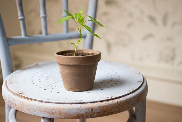 鉢から根がはみ出してる?胡蝶蘭の根の処理の仕方