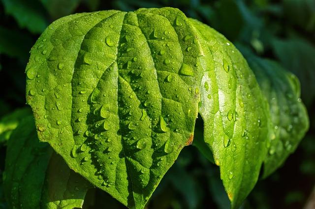 葉水の効果で胡蝶蘭を元気に育てる、簡単なコツ5選