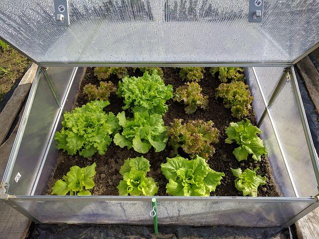 胡蝶蘭は温室で育てるのが良い?温室がいい理由と、環境の作り方について