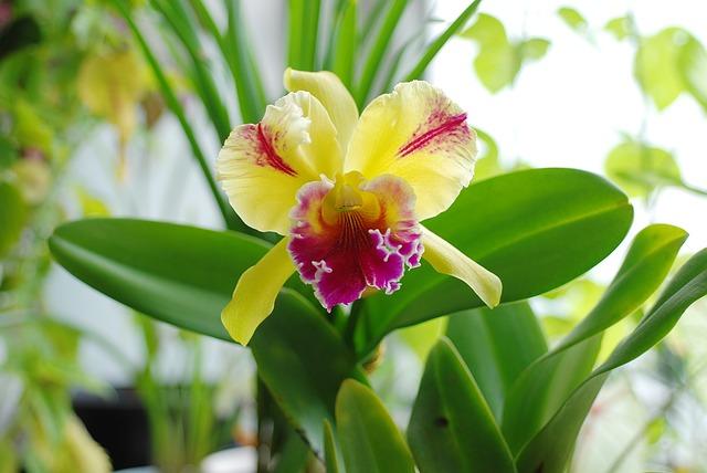 胡蝶蘭のほかのおすすめの蘭