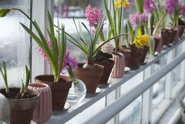 ポリポットと胡蝶蘭の関係