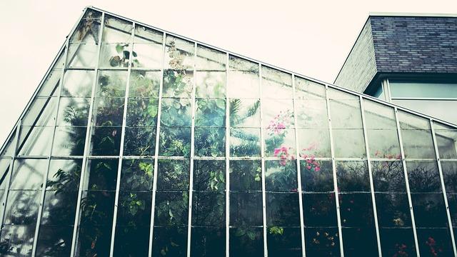 胡蝶蘭 温室