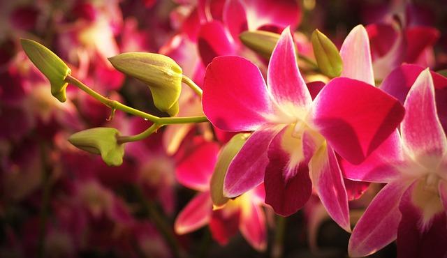 オーキッドの花