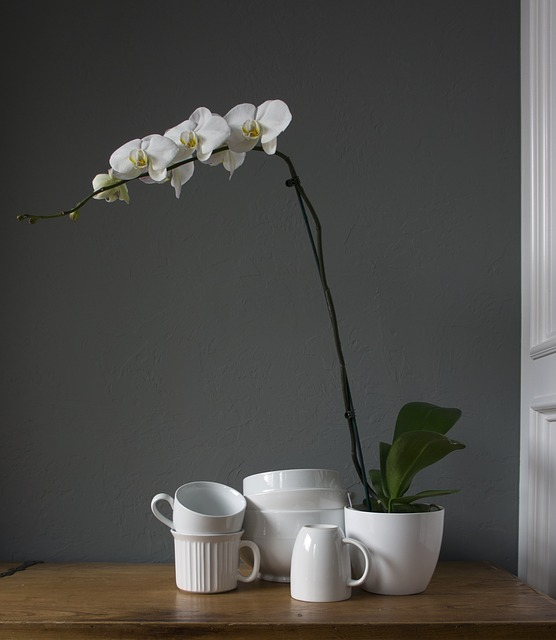 胡蝶蘭の水苔での育て方
