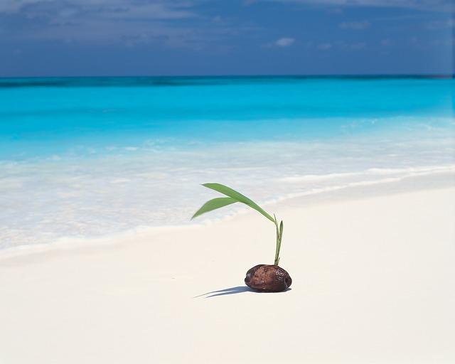 現状は不可能!? 胡蝶蘭を種から育てる方法はあるのか?