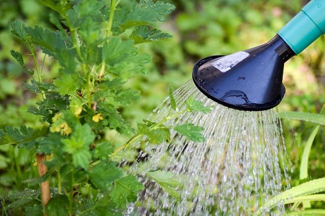 胡蝶蘭 水やり