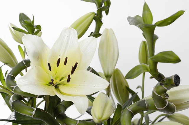 風水の効果を高める胡蝶蘭