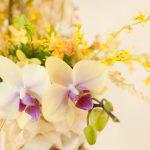 一周忌で胡蝶蘭の花を贈る前に知っておきたい5つのポイント