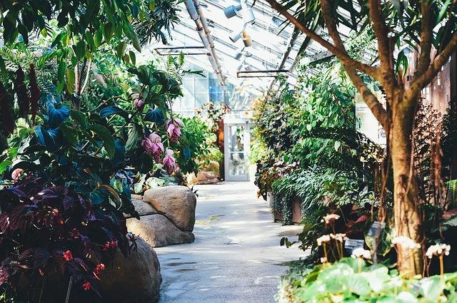 胡蝶蘭 暖房 温室