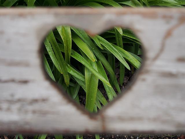 胡蝶蘭の葉に穴が開く原因と対処方法