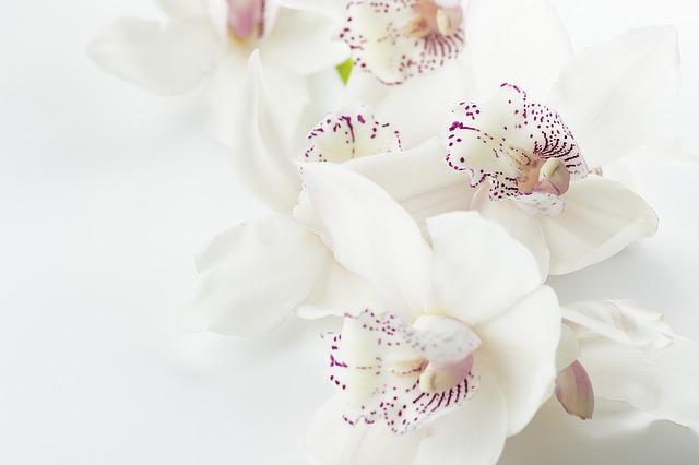胡蝶蘭 アレルギー 造花