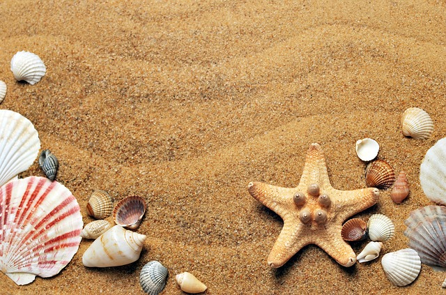 胡蝶蘭は砂を使っちゃダメ!安全な用土とは