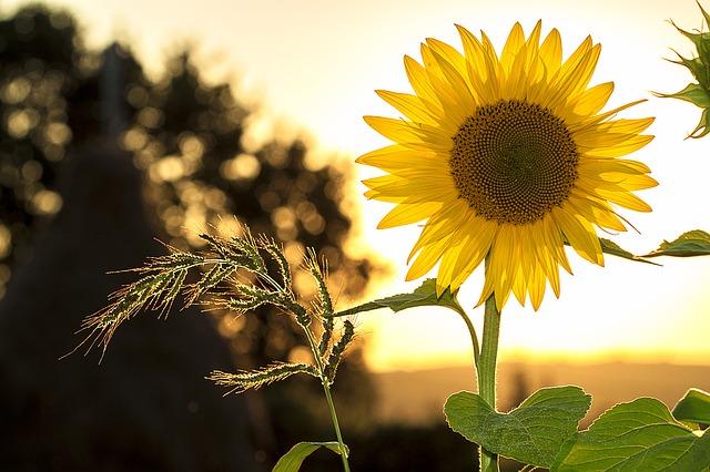 直射日光はNG! 遮光された日光であなたの胡蝶蘭も元気に長生き!