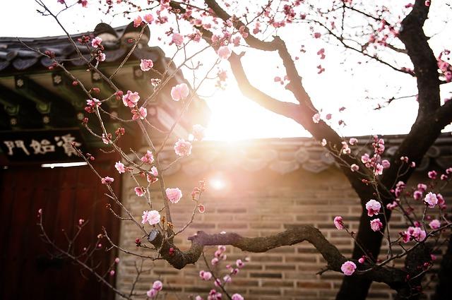 胡蝶蘭 買う時期 春先