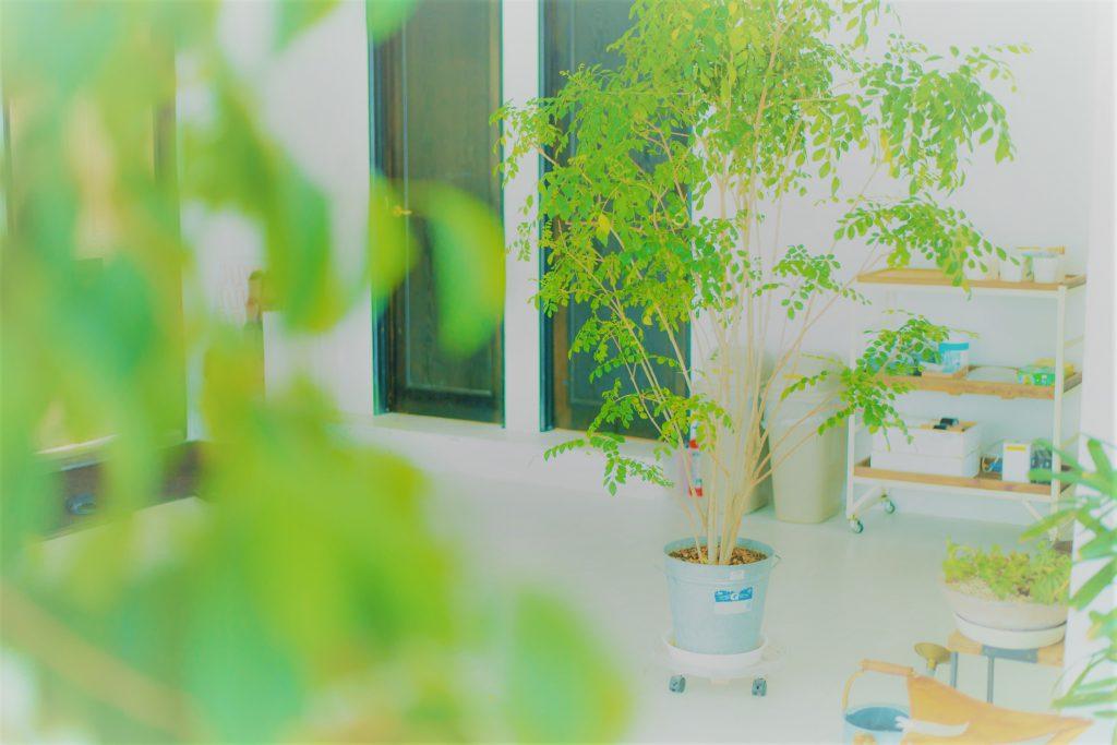 温かいところ 胡蝶蘭