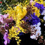 フラワーアレンジメントが喜ばれる理由は?胡蝶蘭を使ったアレンジメントはあるの?