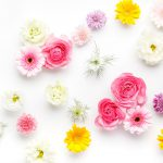 日比谷花壇の胡蝶蘭について調べてみた