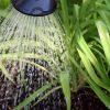 胡蝶蘭の水やりとケア