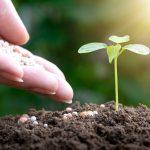 胡蝶蘭には肥料が必要?胡蝶蘭が喜ぶ肥料の与え方