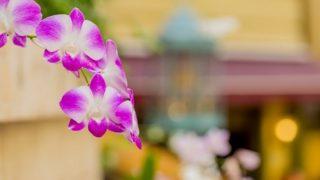 京都の胡蝶蘭を取り扱う生花店