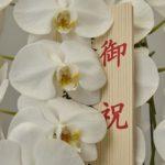 これを知っていると得をする!!胡蝶蘭をお祝いに贈る時のノウハウ