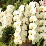 季節ごとの胡蝶蘭の育て方