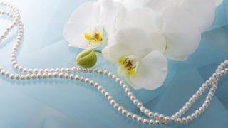 胡蝶蘭を花束にして贈るときのメリットと注意点