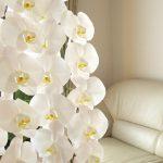 スタンド花の胡蝶蘭を贈る時はどうすればいい?用途や手配について