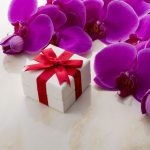 人気のミディ胡蝶蘭とは?種類や利用シーンをまとめて紹介!