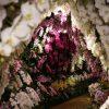 胡蝶蘭の花言葉は色によって変わる!