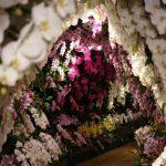 胡蝶蘭の定番は白だけど、他の色もオススメ!