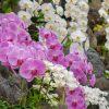 都内で胡蝶蘭を贈りたい!お店選びのポイントとおすすめフラワーショップ紹介