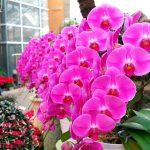 5月に胡蝶蘭を育てるポイントは?水やり・発芽について