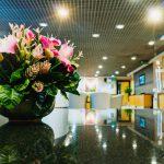 胡蝶蘭 をオフィスに置くときの手入れのポイントと注意点