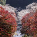愛知県一宮で胡蝶蘭 を選ぶときにおすすめのお花屋さんを紹介