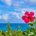 沖縄で胡蝶蘭を贈りたい方必見!人気花屋・通販サイト5選をご紹介!