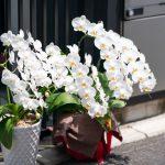 捨てるだけではもったいない!お祝いで贈られてきた胡蝶蘭の処分の方法は?